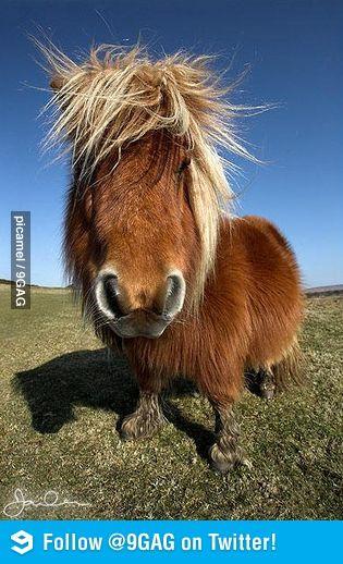 97da974a28 Shetland Ponies Dressed in Cardigan Sweaters To Promote Scotland ...
