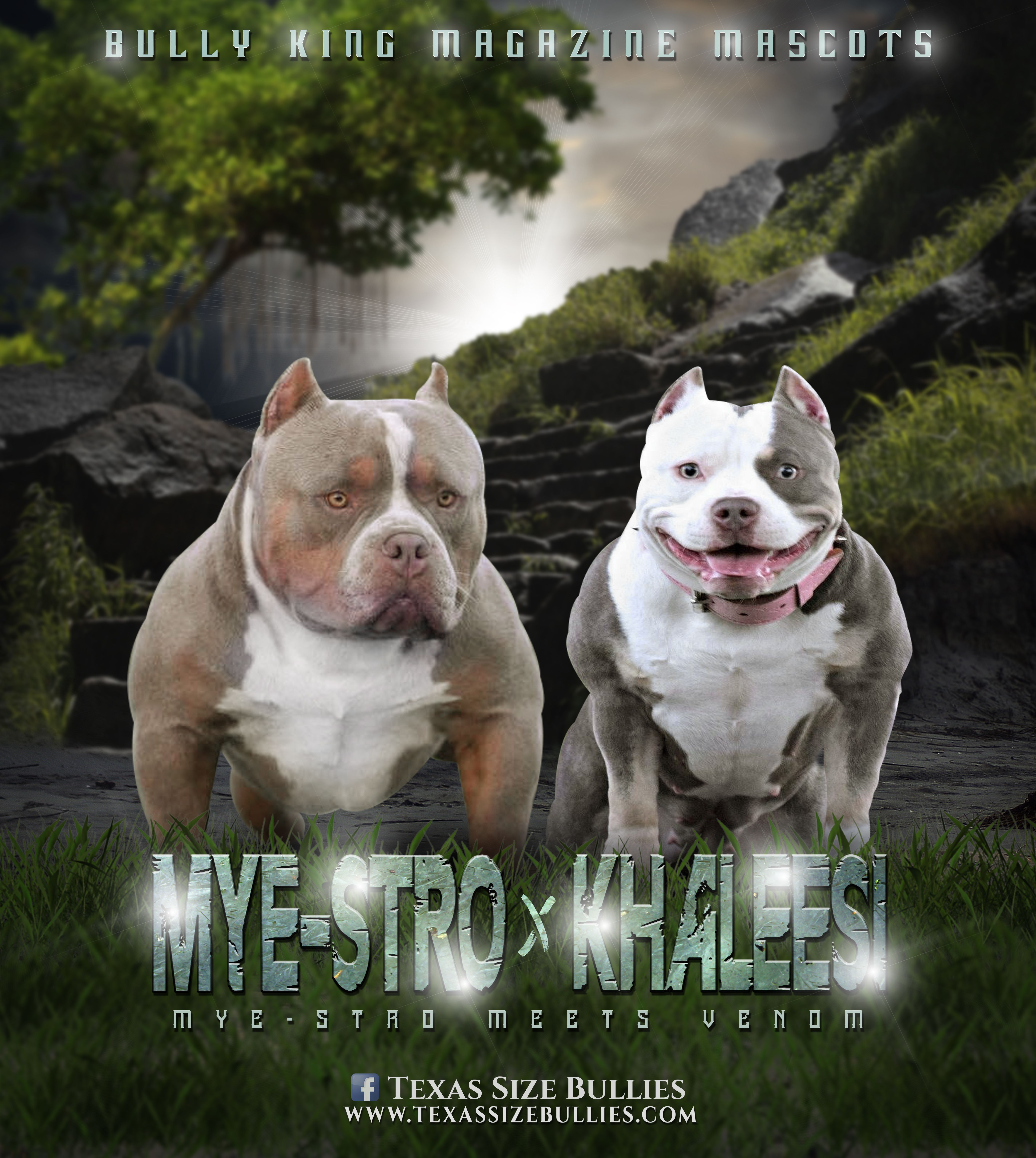 Mye Stro X Khaleesi Breeding Sched In Next 2 Months Bully Breeds