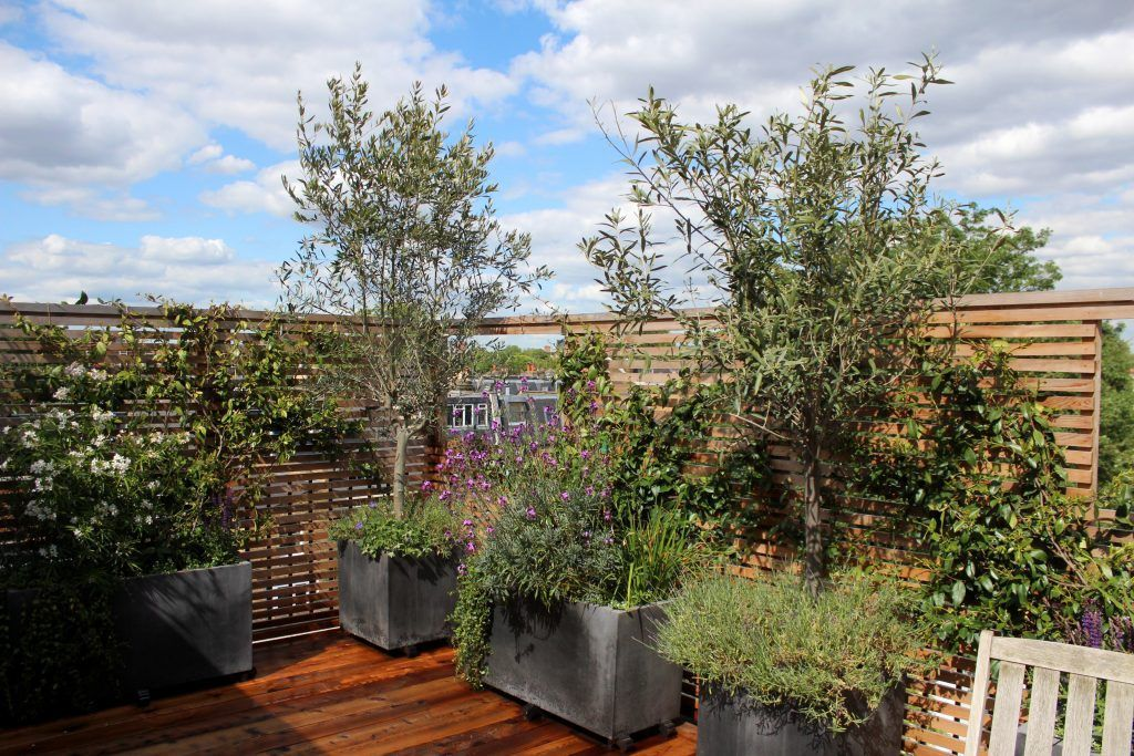 Top 10 Best Trees For Small Gardens Small Garden Plans Small