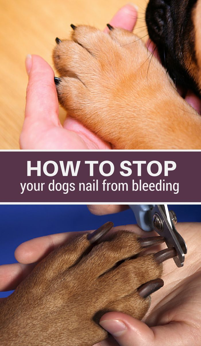 5 Ways to Stop Your Dogs Nail From Bleeding | Dog Care Tips | Dog ...