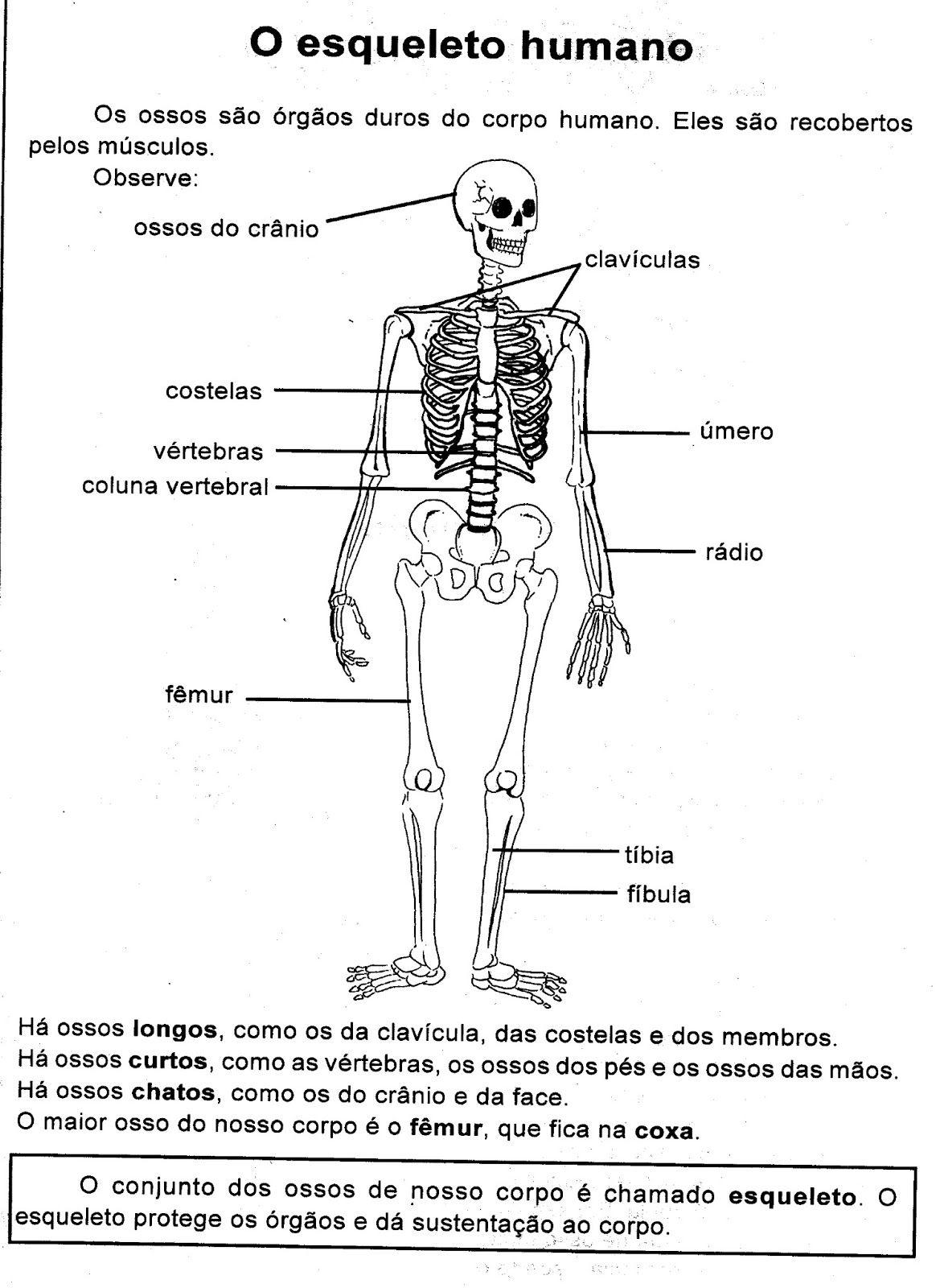 Pin de Maia en BIOLOGIA | Pinterest | Ciencia, Aula y Anatomía