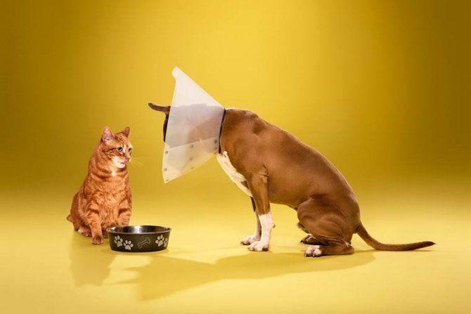 Foto di cani imbarazzati a causa del collare elisabettiano #dogs #funny