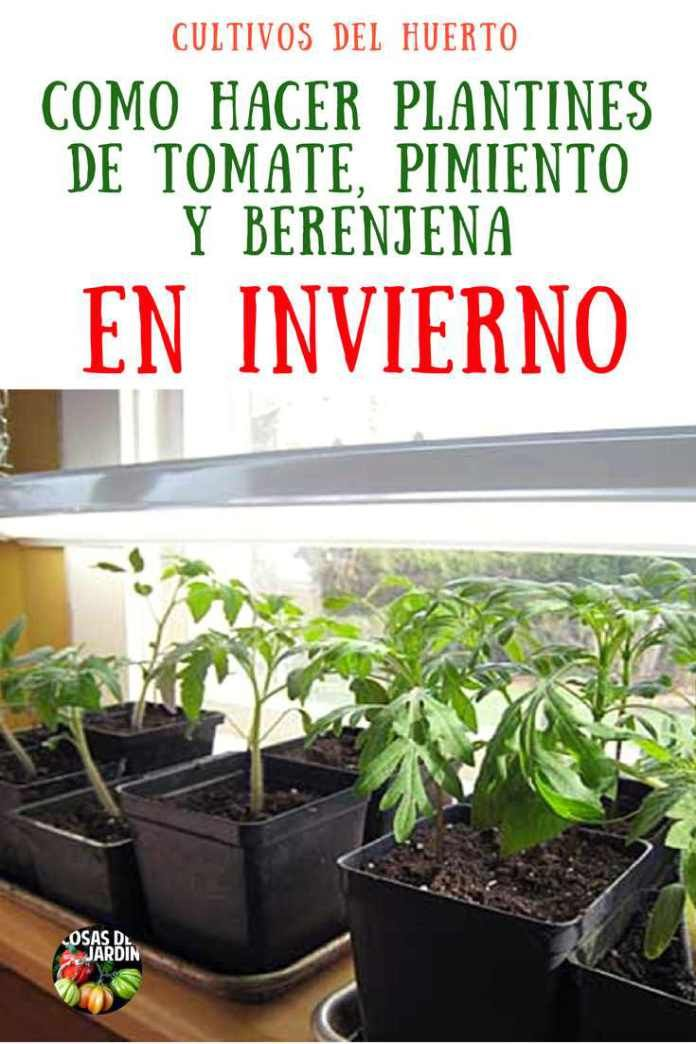 Como cultivar tomates pimientos y berenjenas en invierno - Cuando plantar tomates ...