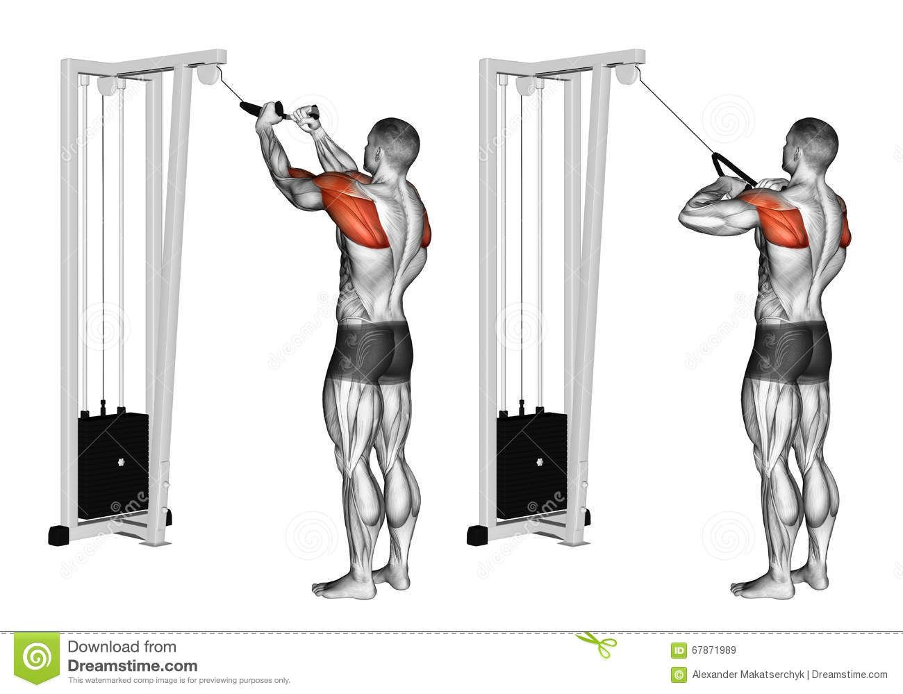 Exercising Cable Rope Rear Delt Rows Download From Over
