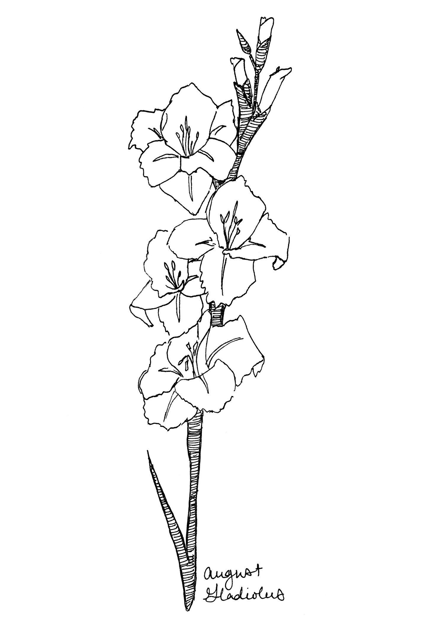 August Gladiolus Art Print Birth Flower Print Gladiolus Etsy Gladiolus Flower Tattoos August Flower Tattoo Birth Flowers