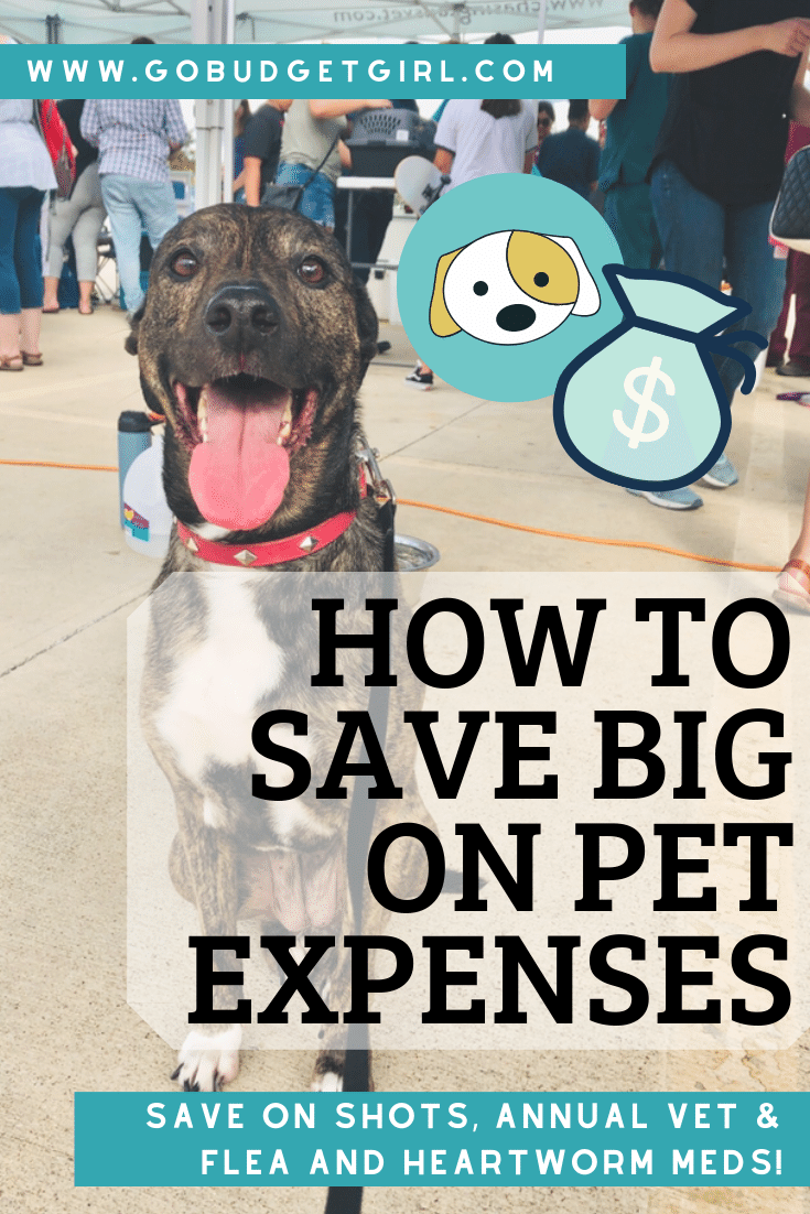 Pets Are Such An Important Part Of Your Life And Giving Them The Care They Need Can Quickly Add Up Find Out How You Can Save Life On A Budget