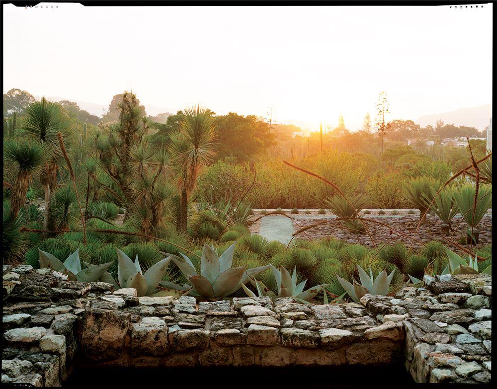jardin etnobotanico de oaxaca from garden design magazine flora greenery pinterest. Black Bedroom Furniture Sets. Home Design Ideas