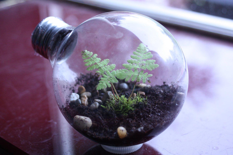 Light bulb terrarium via etsy garden u plants