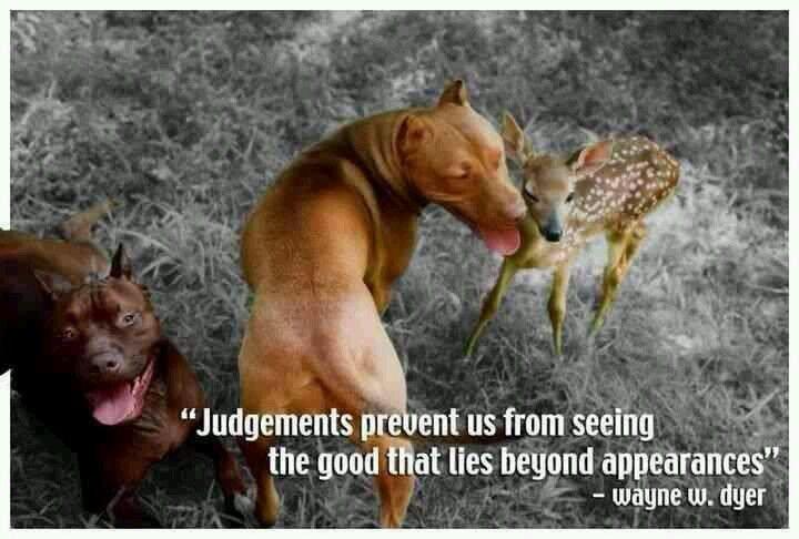 judgement....
