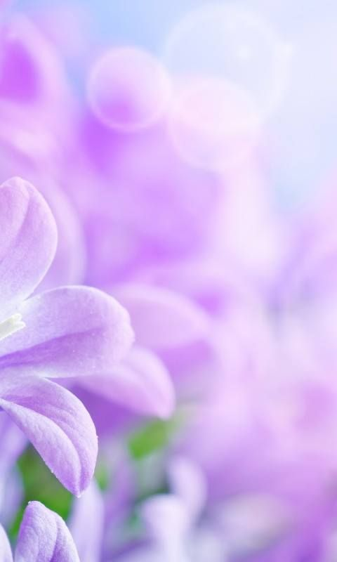 Download 480x800 Spring Flowers Cell Phone Wallpaper Category Flowers Purple Flowers Wallpaper Purple Flower Background Flower Images Wallpapers