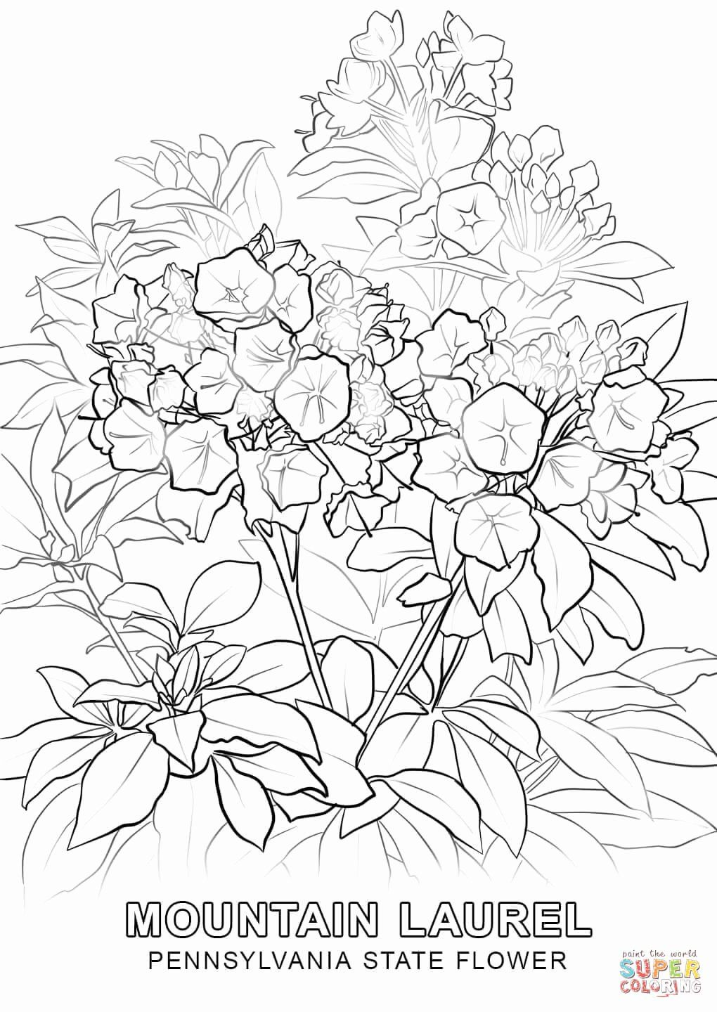 Virginia State Flag Coloring Page Elegant Pennsylvania Coloring