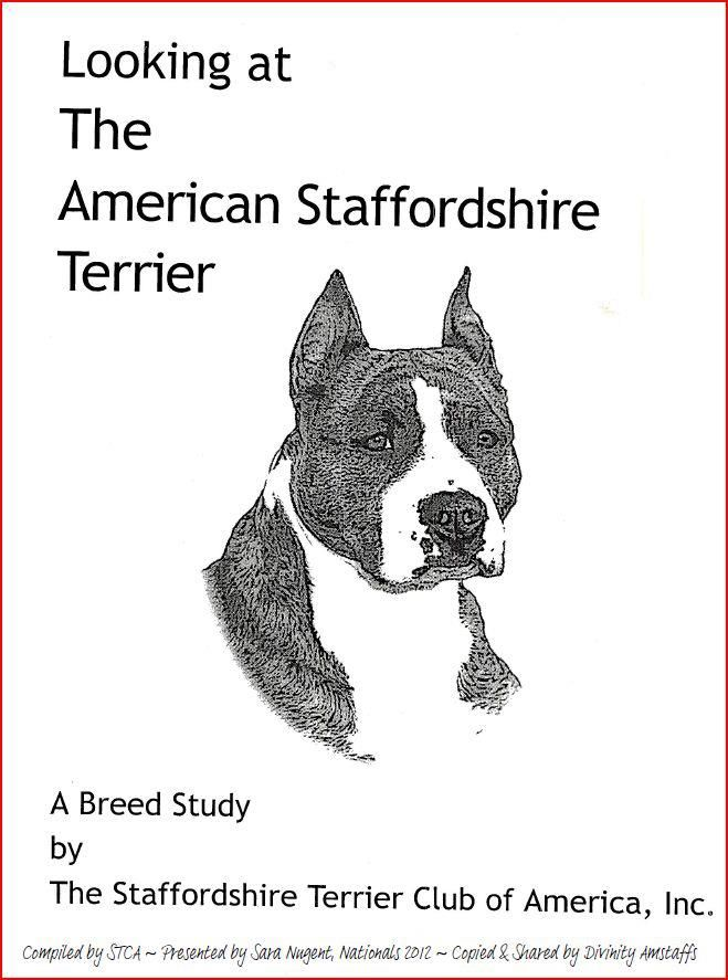 Illustrated Breed Standard Sixfoot S Amstaffs American