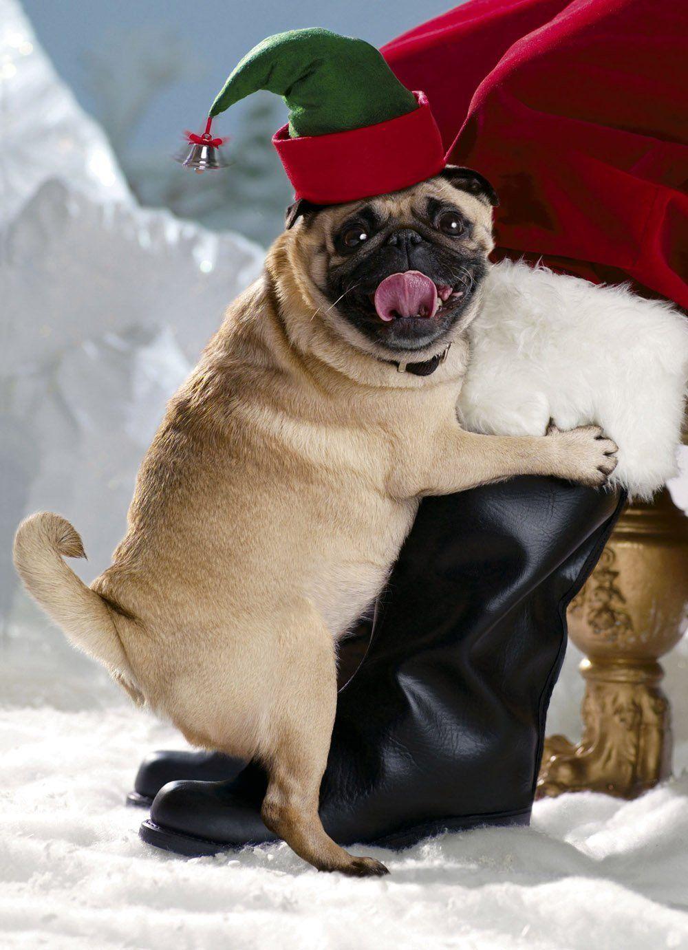 Avanti Christmas Cards