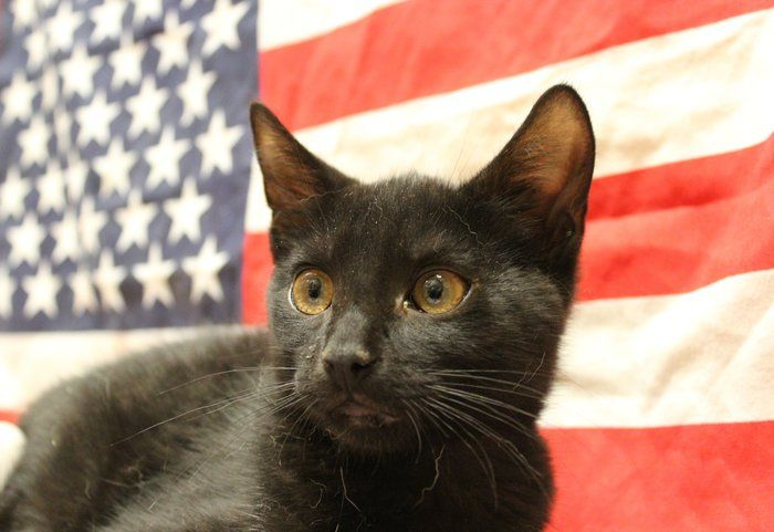 American Cats by Rusty Jhorn visit petsmart charities