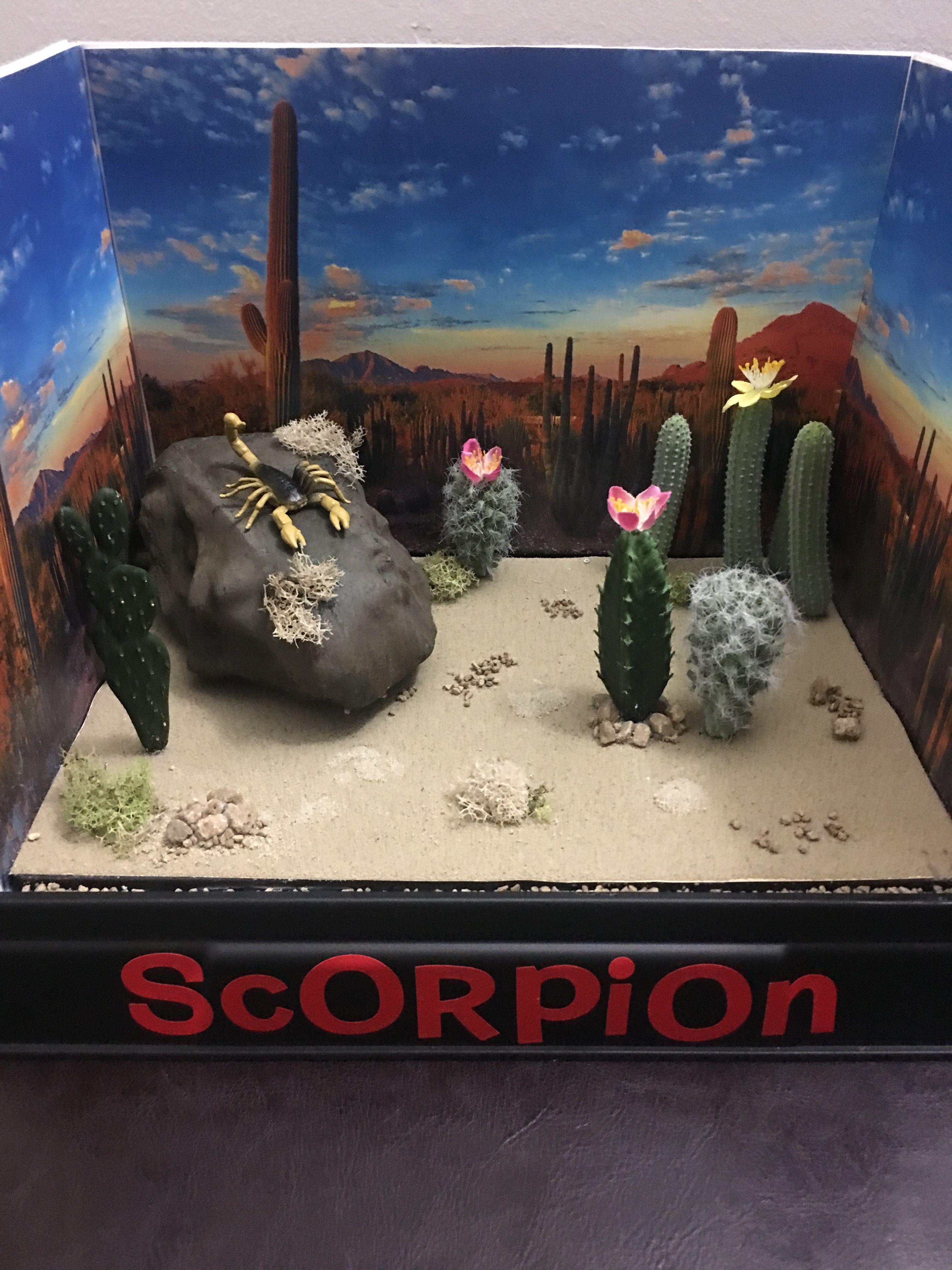 Scorpion Habitat Desert Diorama