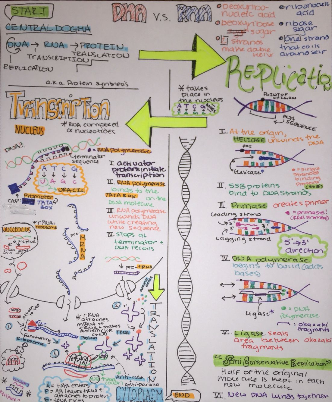 Notes On Central Dogma