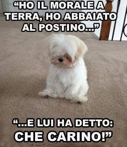 Animali Raccolte Google Vignette Funny Animals Funny Dogs