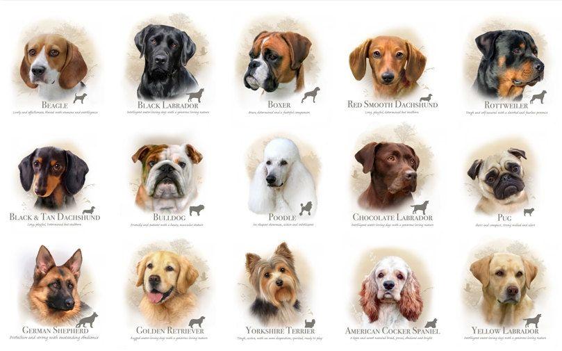 Dog Breeds 1311 Cream Panel Elizabeth S Studio Quilt Top Panel Dog Quilt By Sewwhatquiltshop On Etsy Dog Breeds Dog Breed Names Puppy Finder