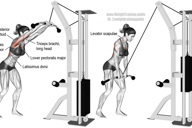 Cable straightarm pulldown Cable workout, Chest