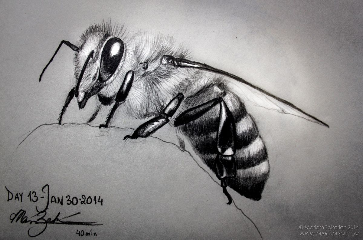 Day 13: Honey Bee