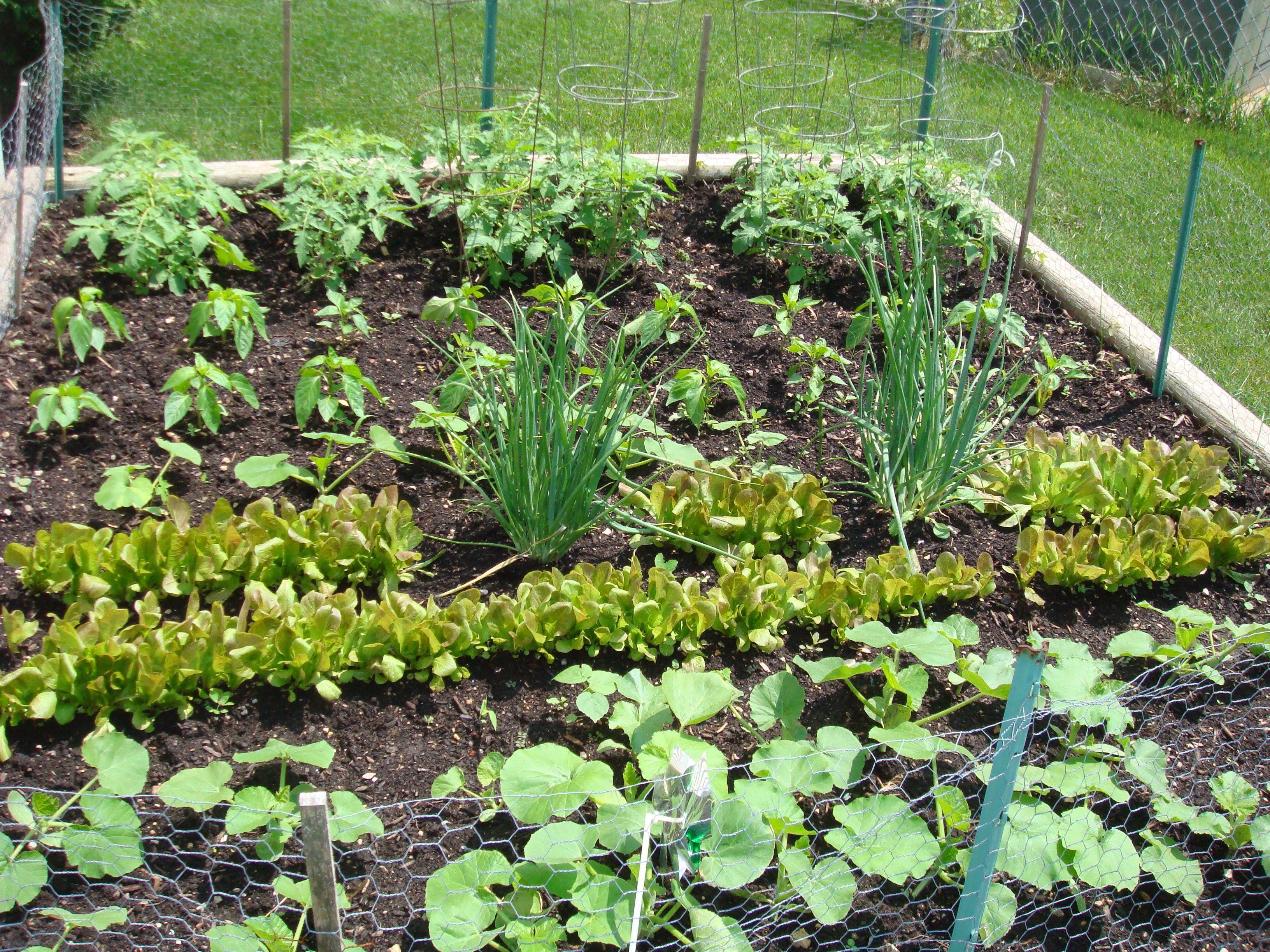 5x5 garden plot | Flowers Gleam and Glow | Pinterest | Gardens ...