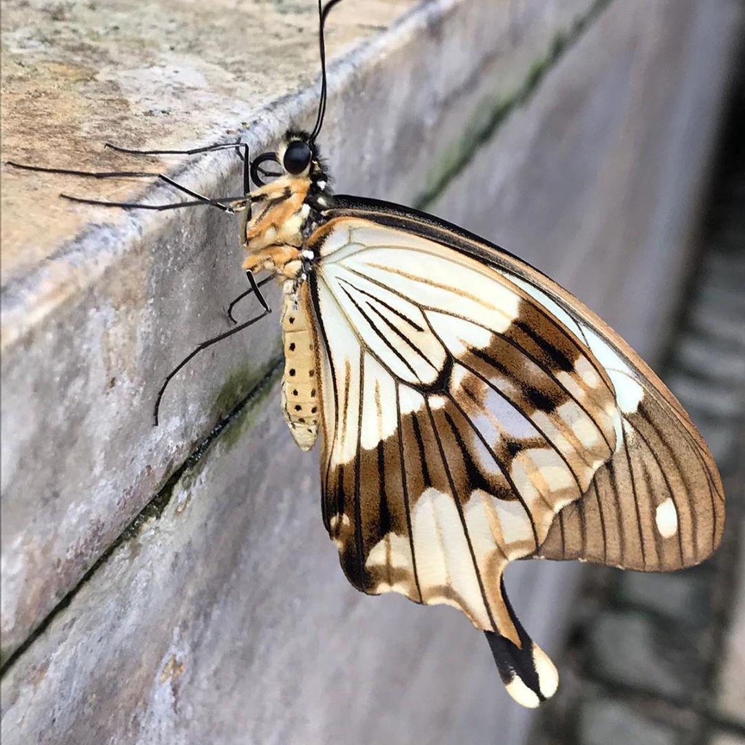 Tropische Schmetterlinge Botanischer Garten Munchen Botanischer Garten Munchen Garten Munchen Botanischer Garten