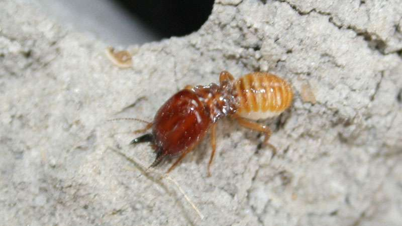 Pin on Termites Information