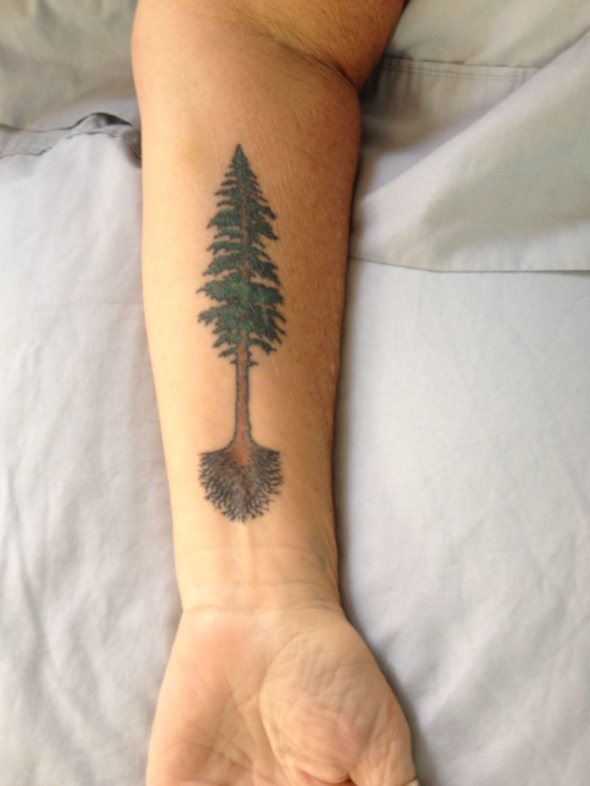 redwood tree tattoo designs pinterest tattoo tree tat and tatoo. Black Bedroom Furniture Sets. Home Design Ideas