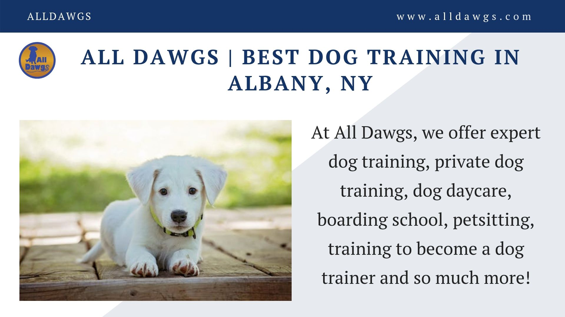 All Dawgs Offers The Best Dog Training In Albany If You Are