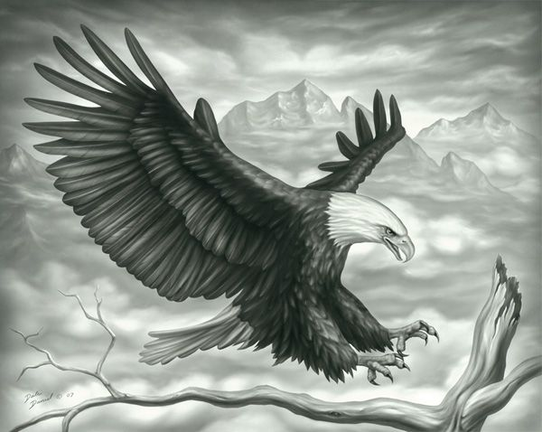 flying-eagle.jpg (600×478) | Tats | Pinterest | Beautiful ...