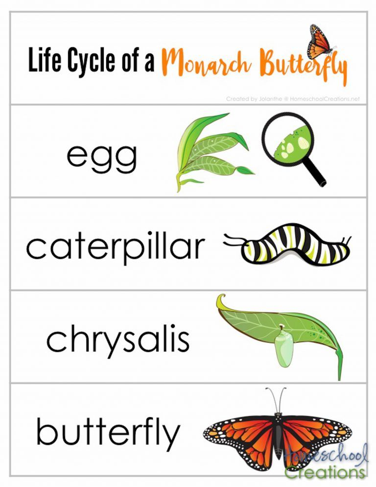 Monarch Butterfly Life Cycle Printables Butterfly Life Cycle