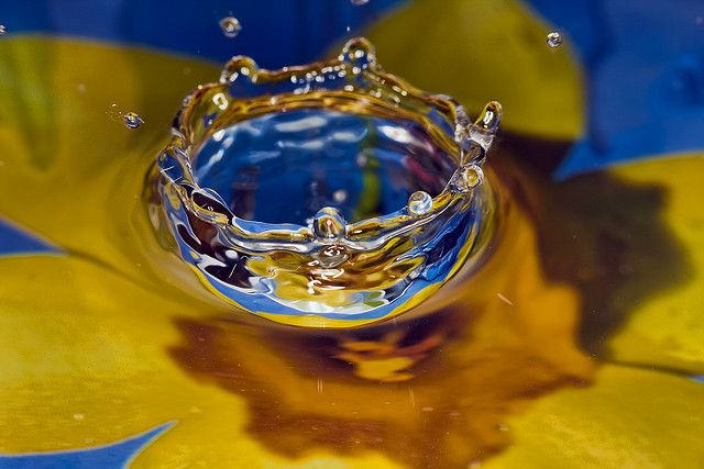 water flower by spettacolopuro, via Flickr