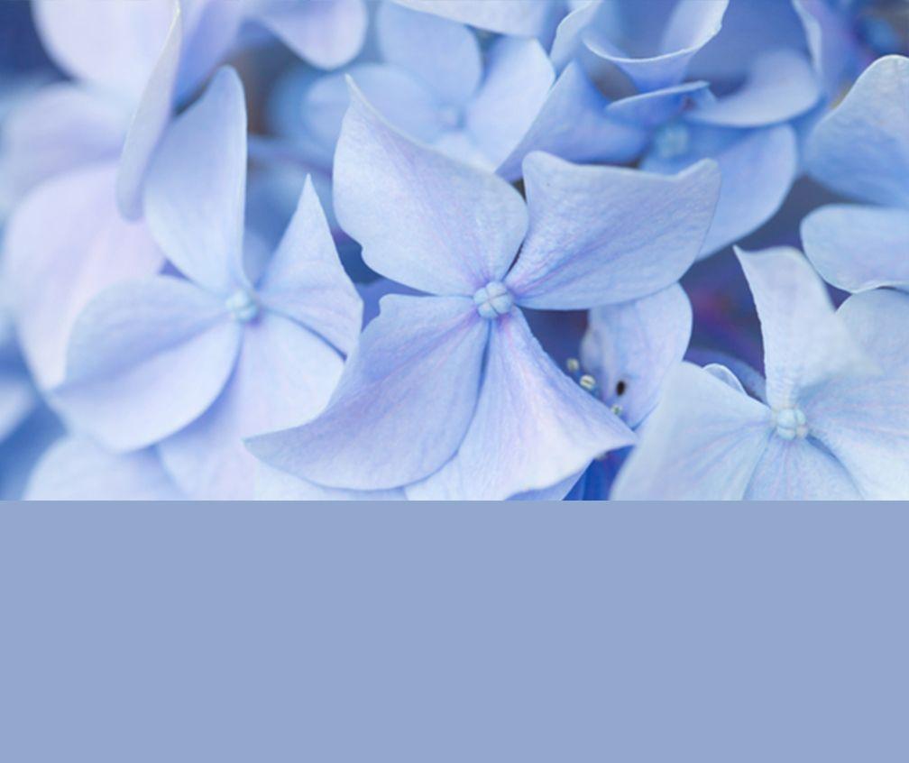 pantone serenity   What\u0027s Trending: Pantone Spring 2016 Color ...