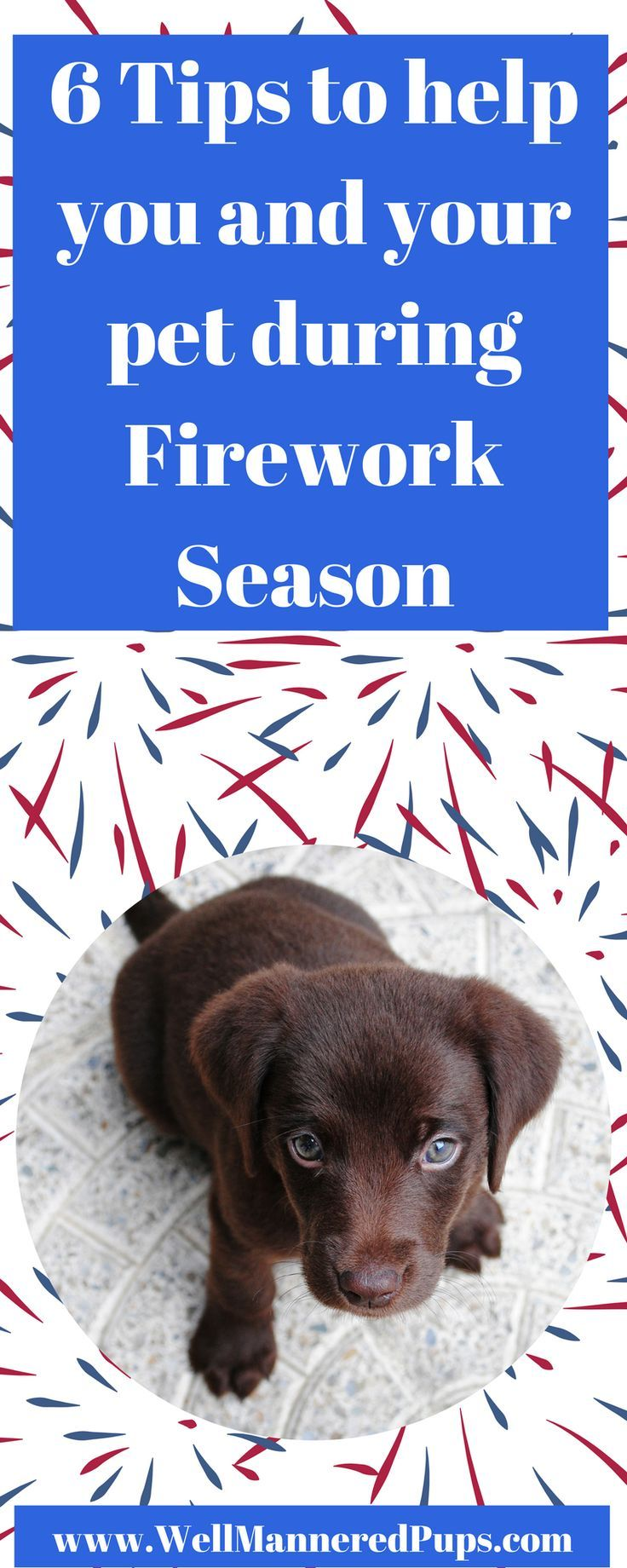 Six Ways For You and Your Dog To Prepare For Labor Day
