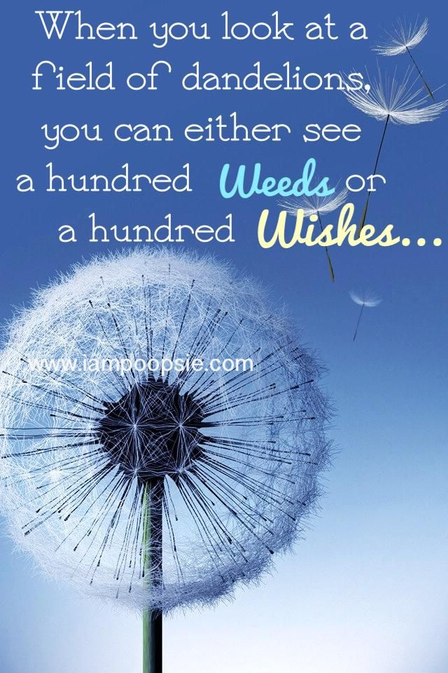 When you look at a field of dandelions, you can either see a hundred of weeds, or a hundred wishes...♥