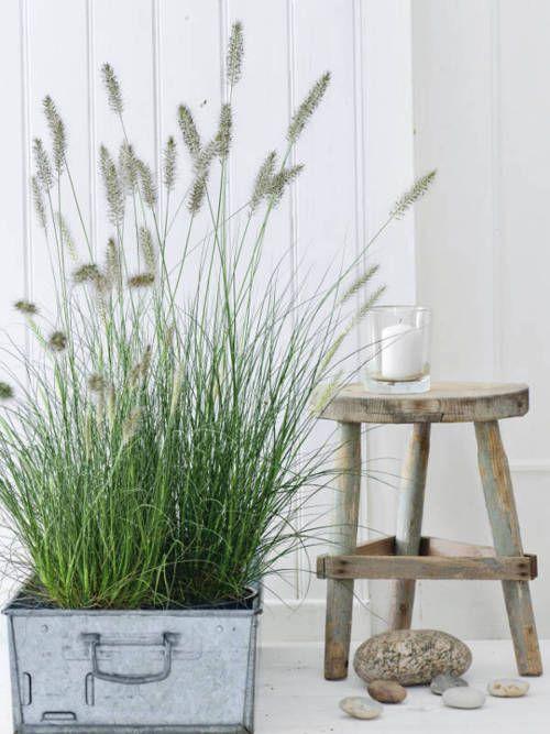 Not Wholl Lord S Road They Tamilan Will Descargar Ornamental Grasses Grasses Landscaping Garden Inspiration