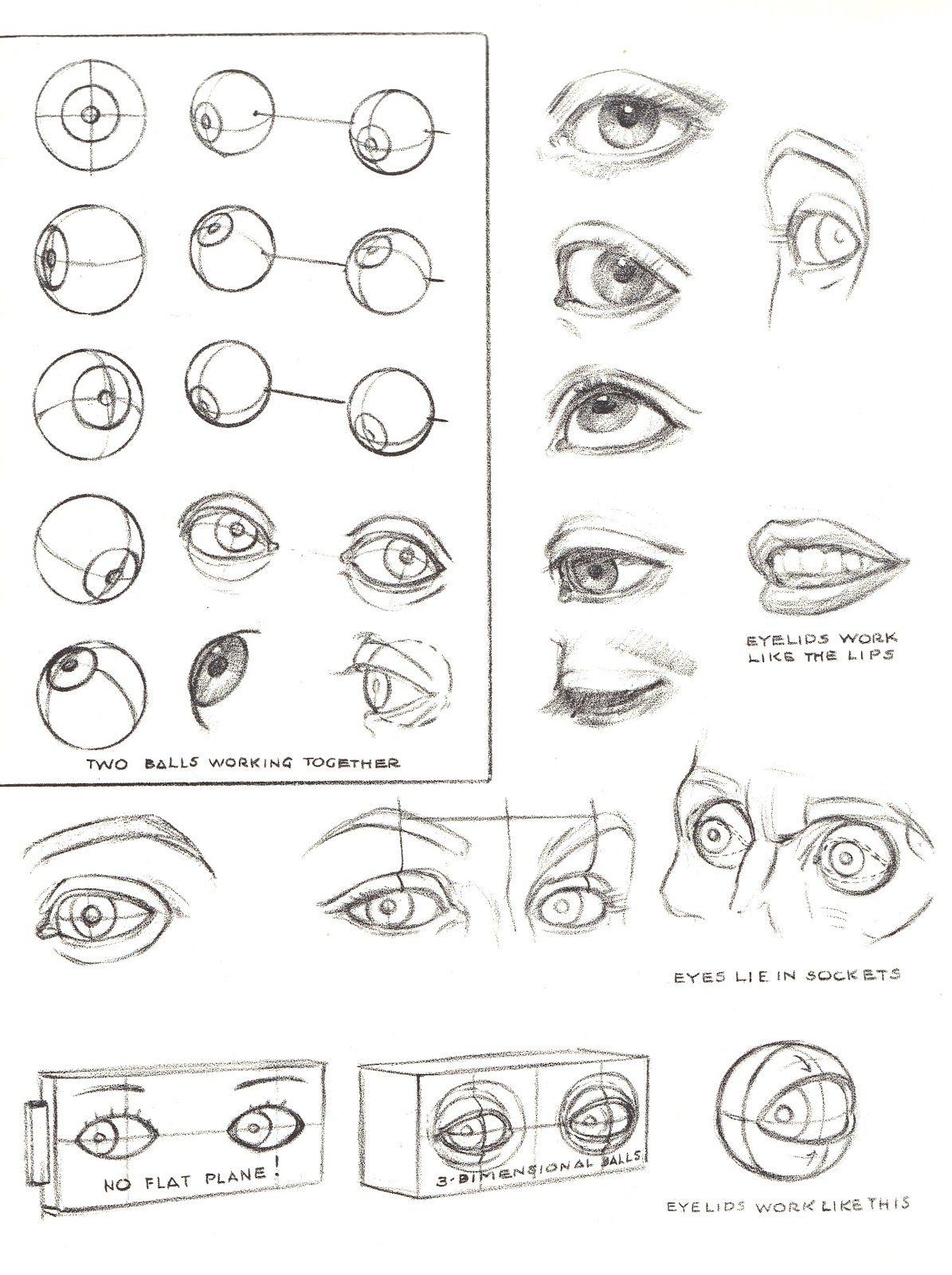 Pin By Selena Kuo On Anatomy