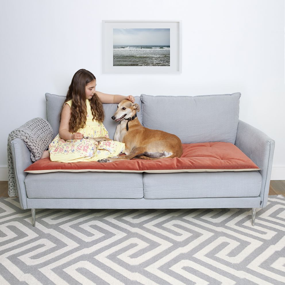 Couch Cover For Dogs Uk