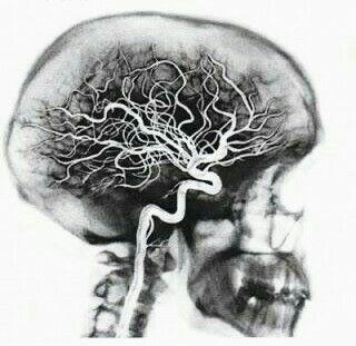 الجهاز العصبي المركزي Nervous System Brain Art Anatomy Art Medical Art