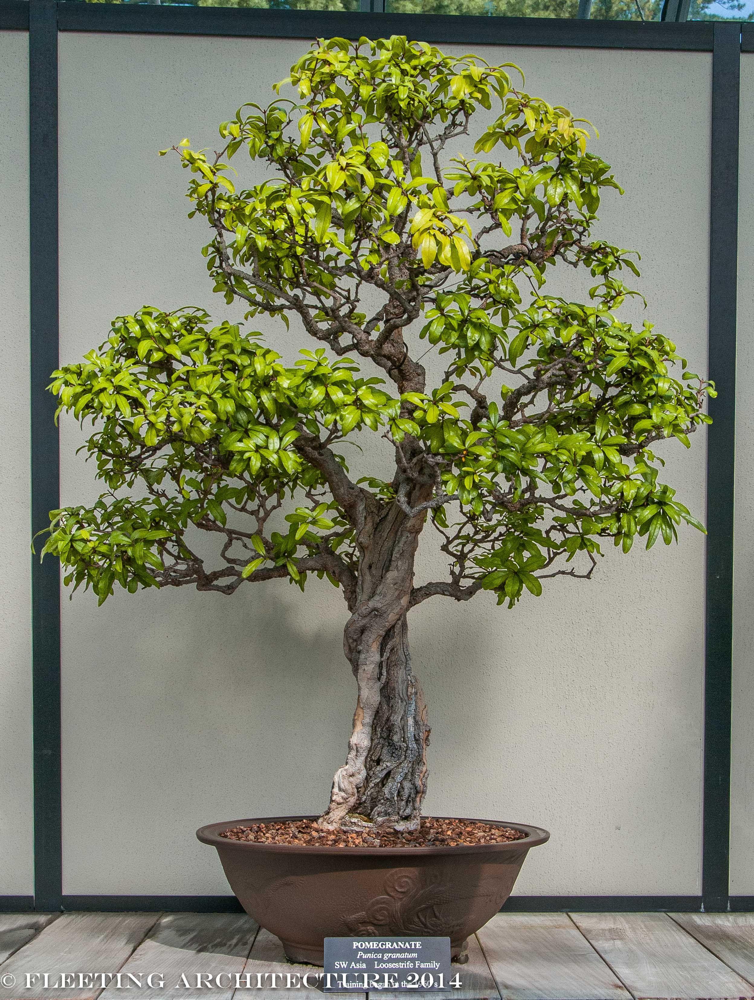 Longwood bonsai blog 13 photos for our bonsai lovers for Kleine mucken in topfpflanzen