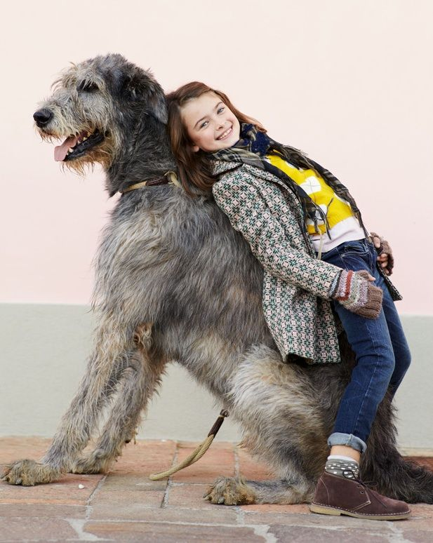 If my kids ever ask me for a pony, I'll get them an irish wolfhound instead. Much better than a pony.