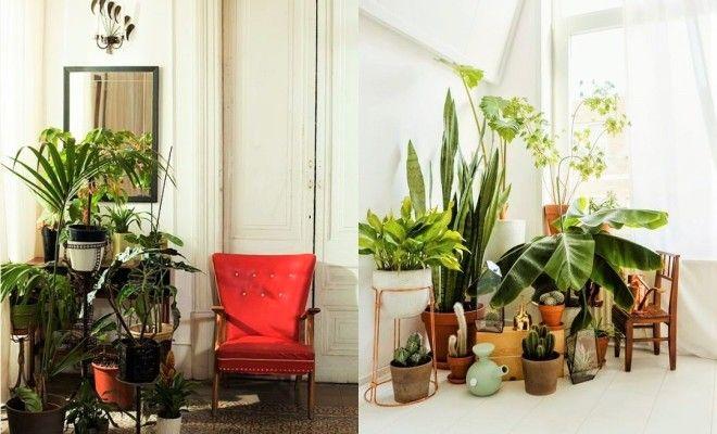 Indoor Plants Decor Ideas Living Room Plants Room With Plants Plant Decor Indoor