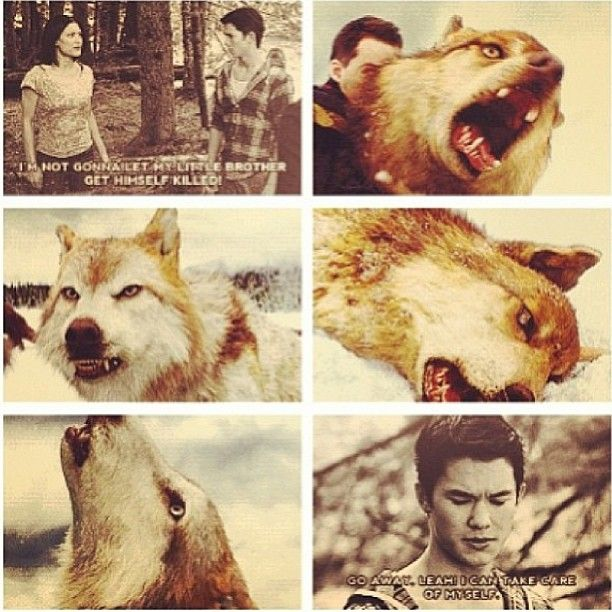 I Hated This Moment In Fact I Hated The Battle Because So Many People Died That I Cared About And I Never Balle Twilight Wolf Twilight Saga Twilight Pictures