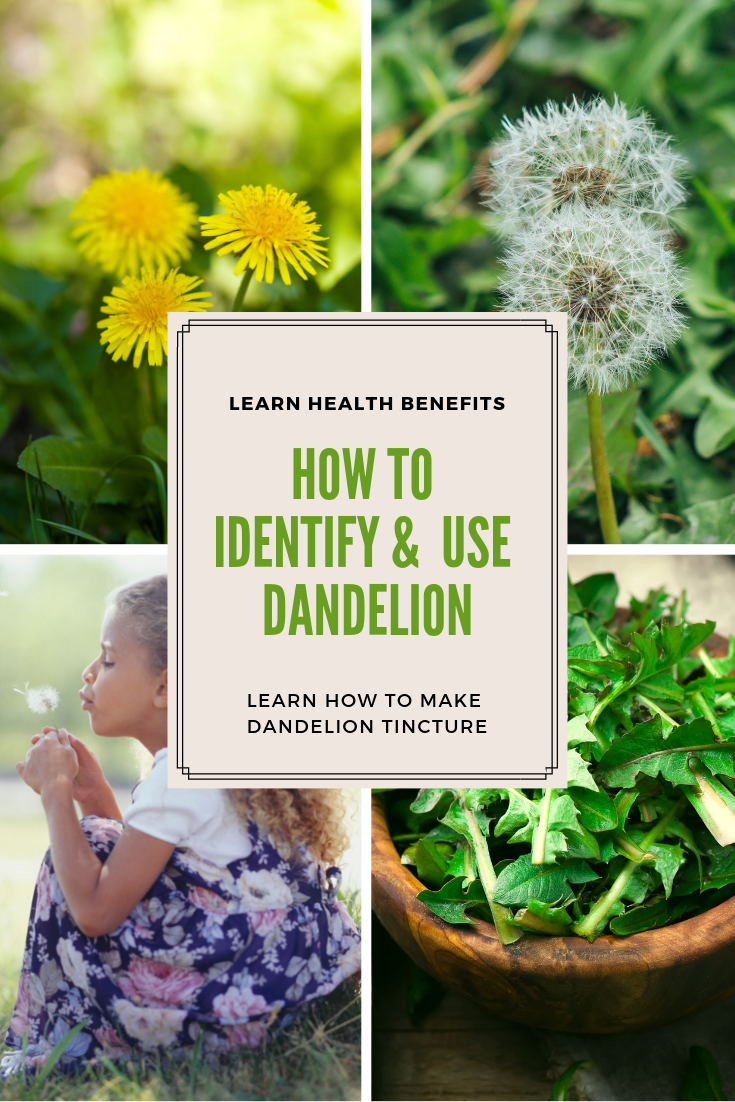 Dandelion Identification Benefits And Uses Country View Herbs Dandelion Plant Medicinal Plants Edible Wild Plants
