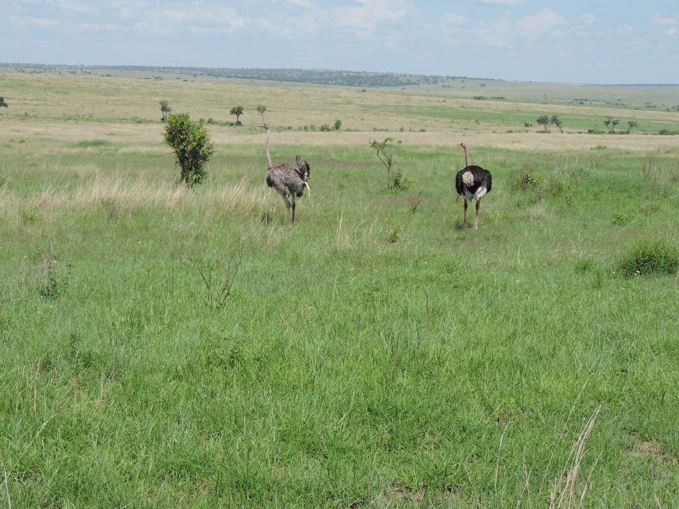 Pin by YHA Kenya Travel Tours & Safaris on YHA Kenya