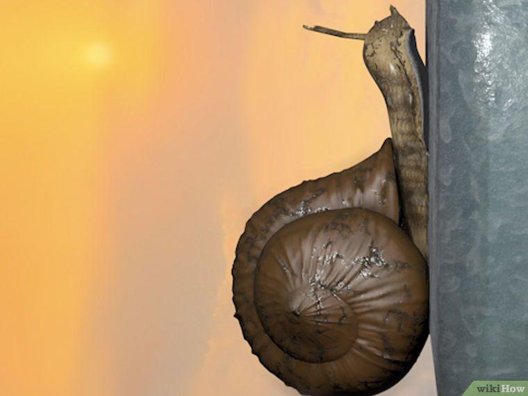 Image titled Care for Snails Step 1Bullet2
