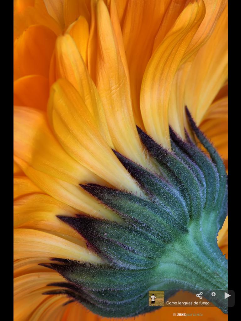 Tournesol | Sunflowers | Pinterest | Girasoles, Flores y Pinturas