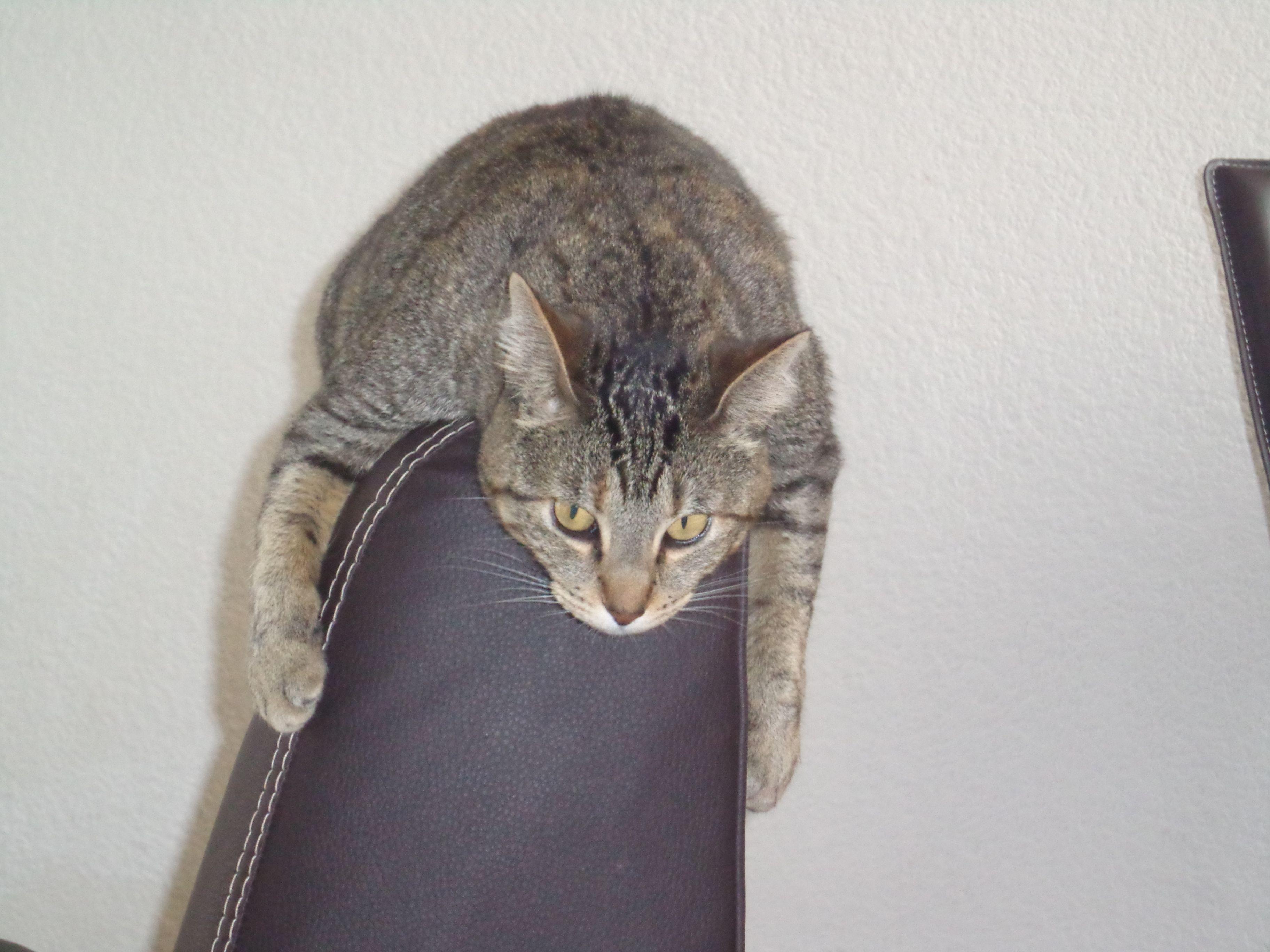 Mi seundo gatito