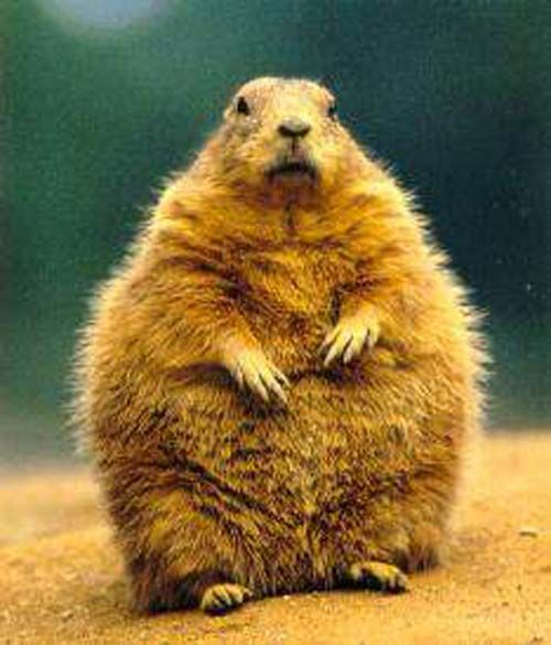 18 Very Fat Animals | SMOSH