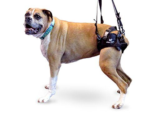 Walkin Lift Rear Dog Harness Read More Reviews Of The Product By Visiting The Link On The Image Dog Harness Pet Harness Dogs